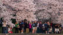 Cherry Blossom Parade draws thousands in DC
