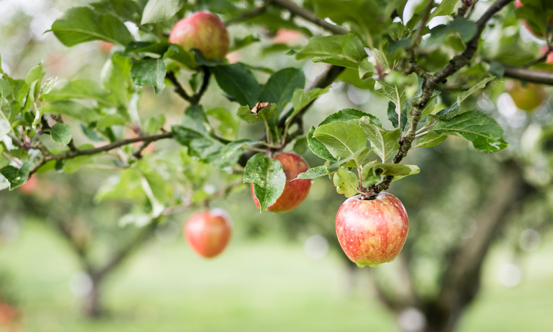Apple orchards in North Georgia are the perfect family weekend escape.