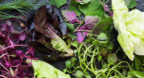 The Elitist's Guide to Salad Greens