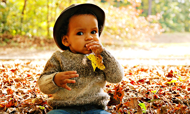 You could just chew on a leaf this fall.