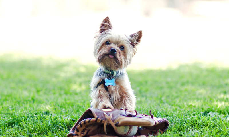 Explore the many green spaces in Atlanta with your pup.