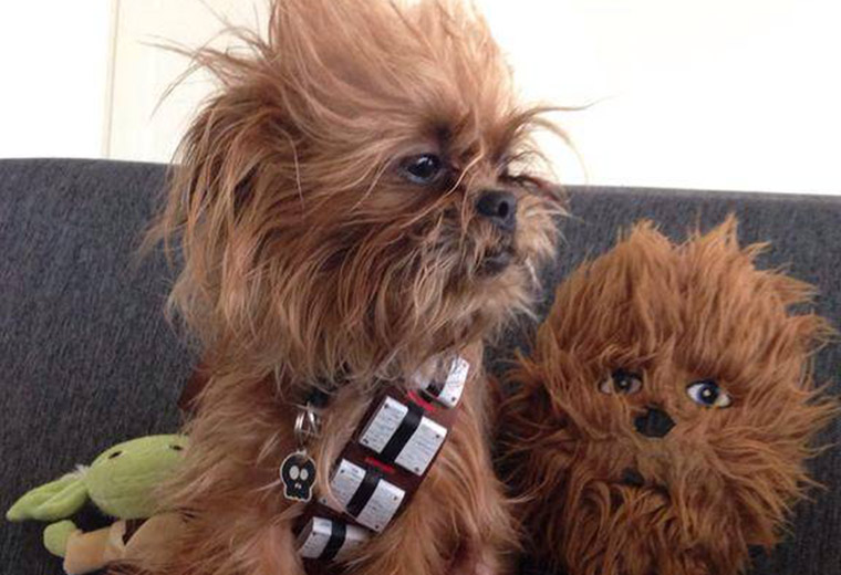 chewbacca-dog.jpg
