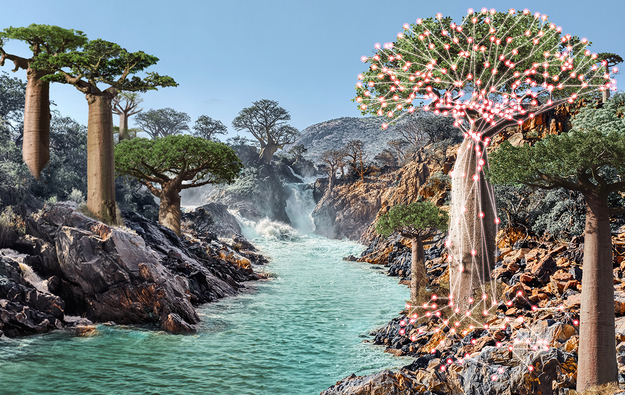 Main visual : Data backup: the baobab tree is nature's data storage system