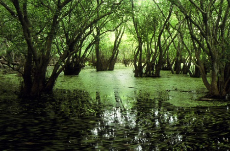 Everglades National Park.jpg