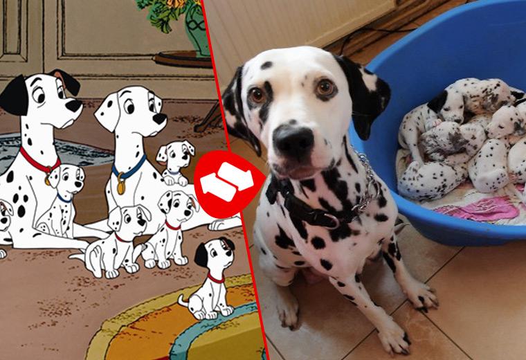 cartoon-dogs-13.jpg