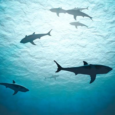The 10 Weirdest, Coolest Sharks in the World