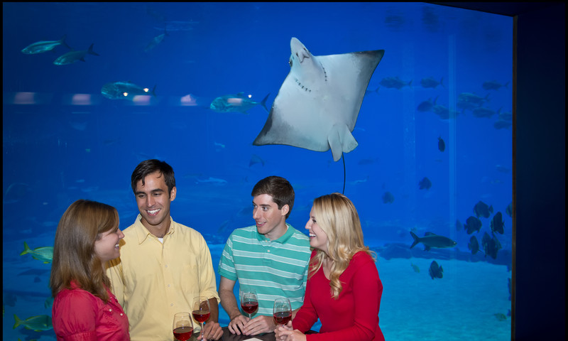 Have a cocktail with your favorite aquatic life-form at Sips Under the Sea.