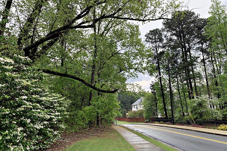 Take a Scenic Drive in Atlanta.jpg