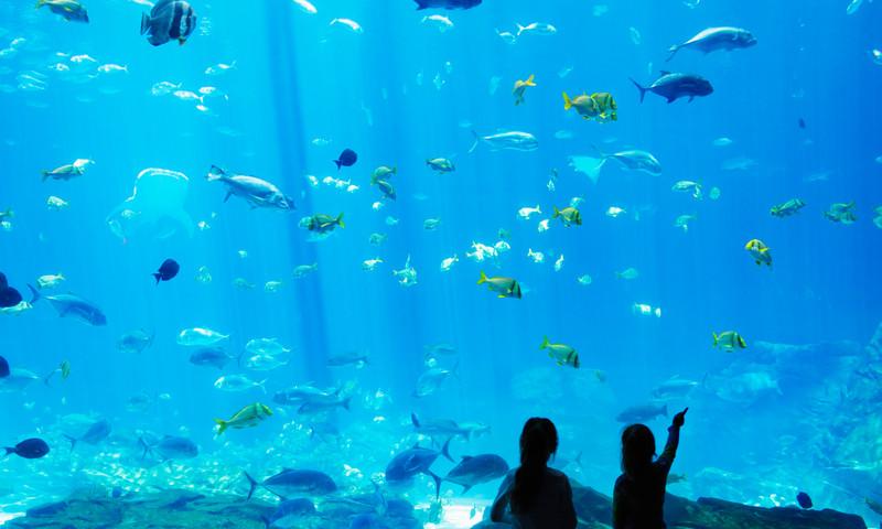 和家人前往佐治亚水族馆来场夏日水下冒险吧! (📷 Georgia Aquarium)