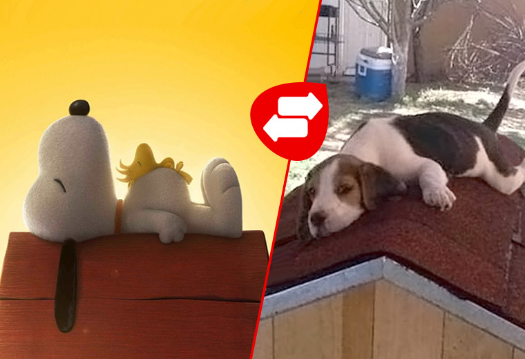 cartoon-dogs-04.jpg