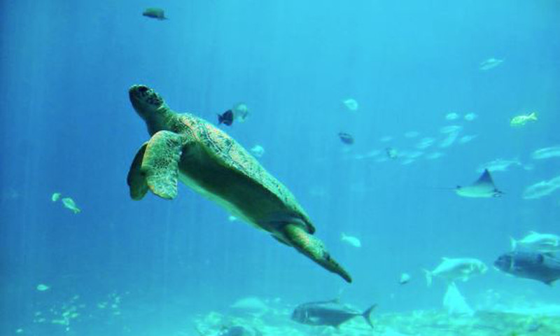 Adults can enjoy a unique lecture series at Georgia Aquarium.