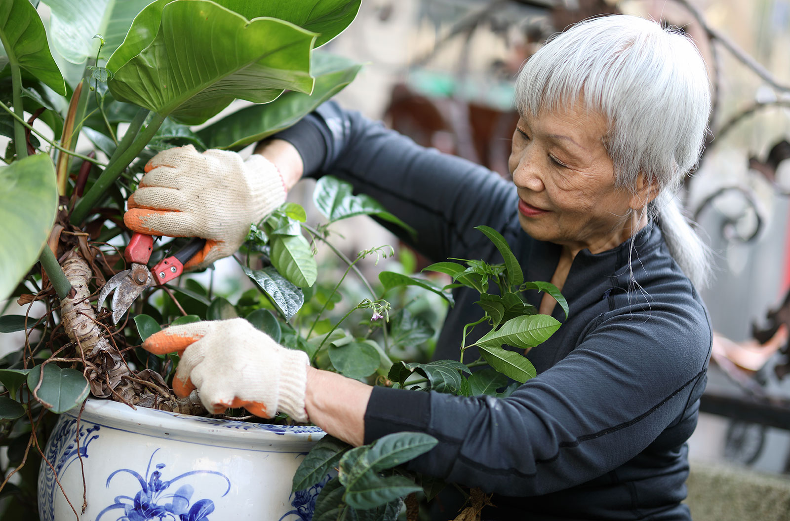 A senior retiree pots a plant in her garden at home