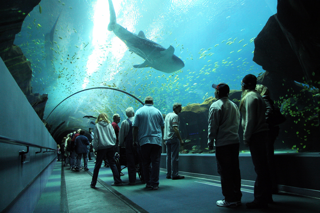 Atlanta-Georgia-Aquarium-Tunnel.jpg
