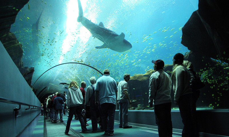The Georgia Aquarium Brims With Undersea Beauty