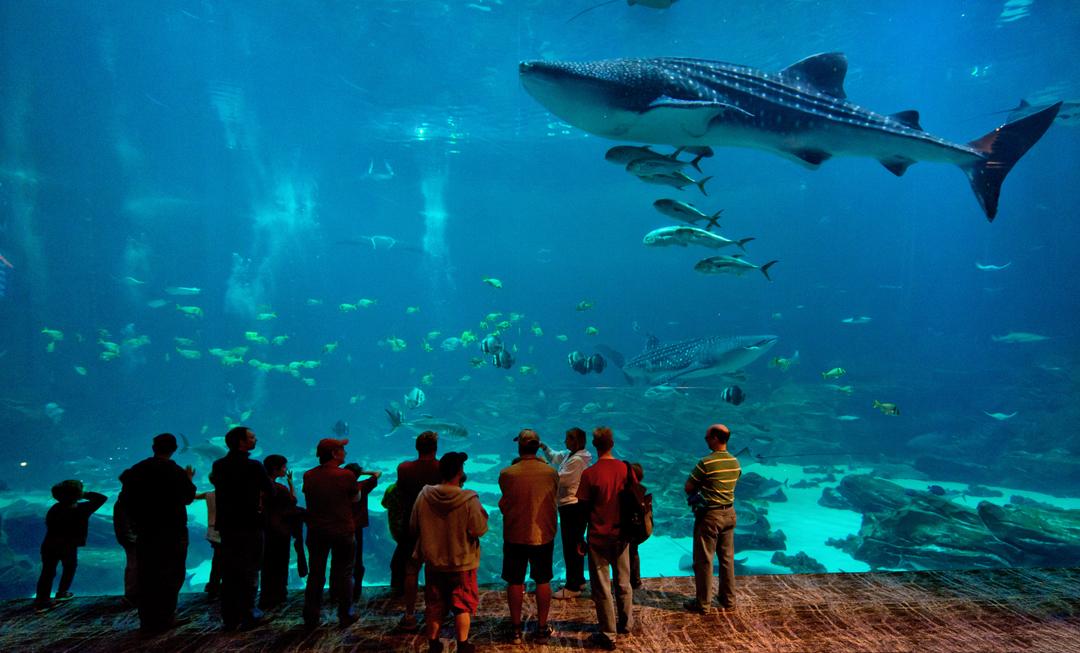Atlanta-Georgia-Aquarium-Guests-Whale-Shark.jpg