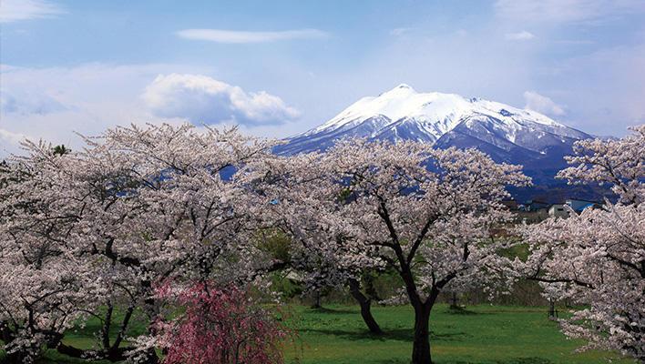 メインビジュアル : アプリを使って東北の桜を満喫!「桜の札所」108カ所を巡る旅