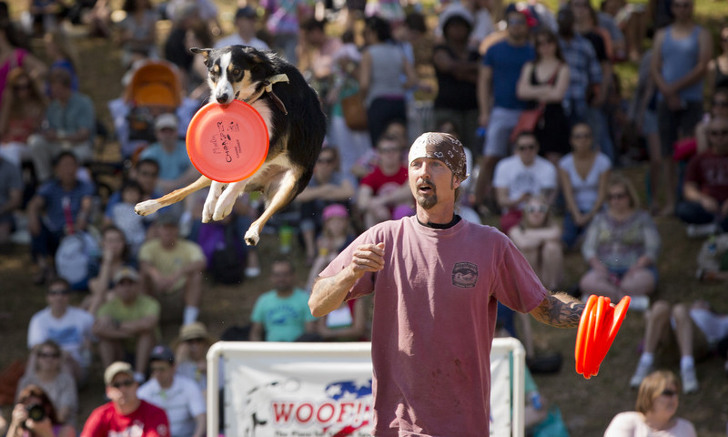 Talented and athletic dogs compete for a prestigious invitation during the Atlanta Dogwood Festival.