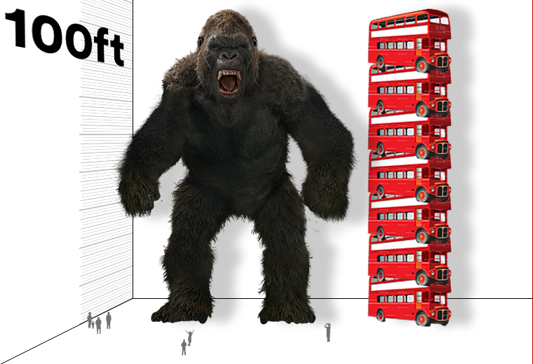 height chart KONG.png
