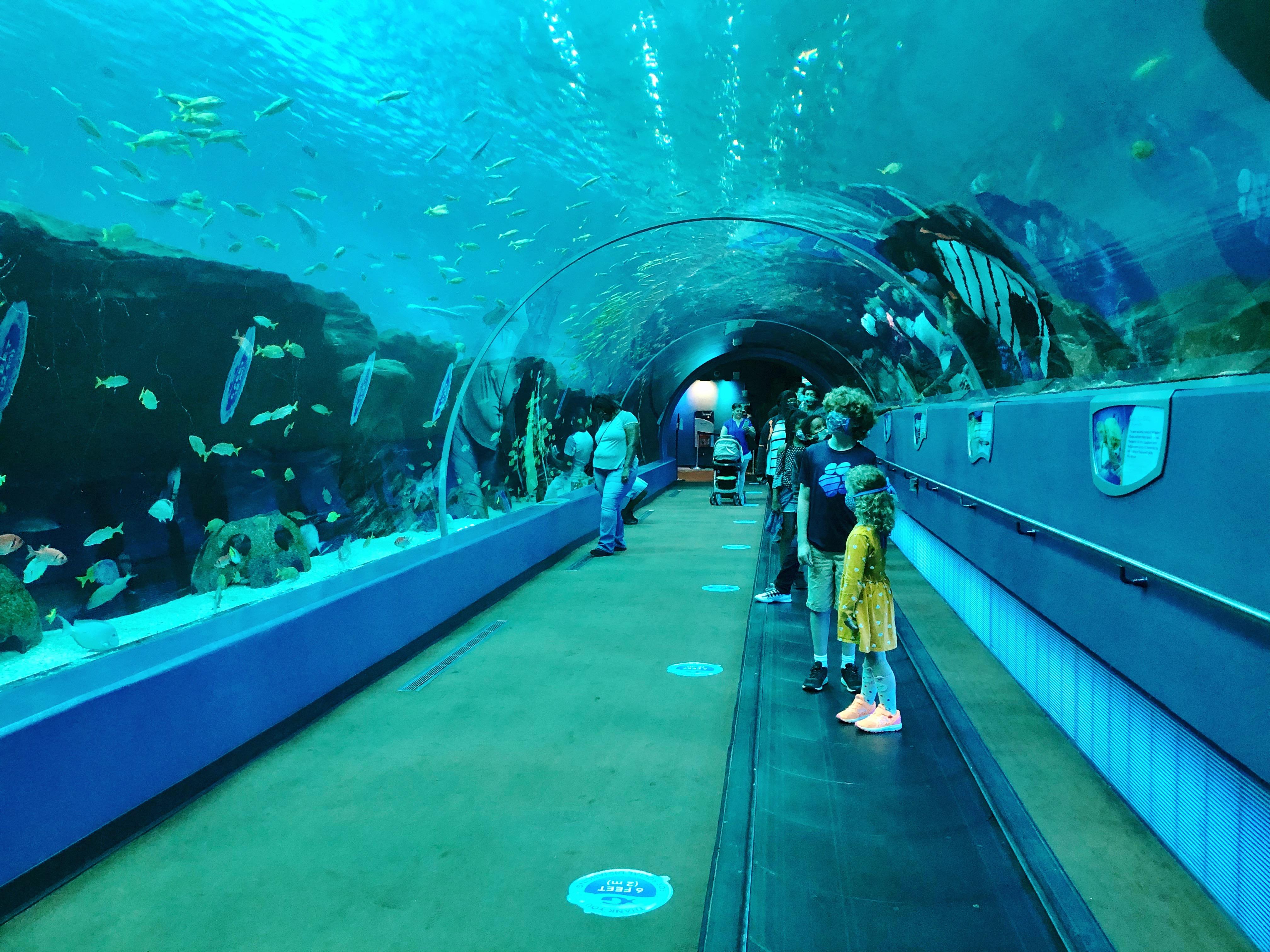 Save on Atlanta Experiences with CityPASS - Georgia Aquarium & More